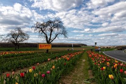 """""""Blumen selber schneiden"""". Das kann man hier in Gadheim zu einem sehr günstigen Preis."""
