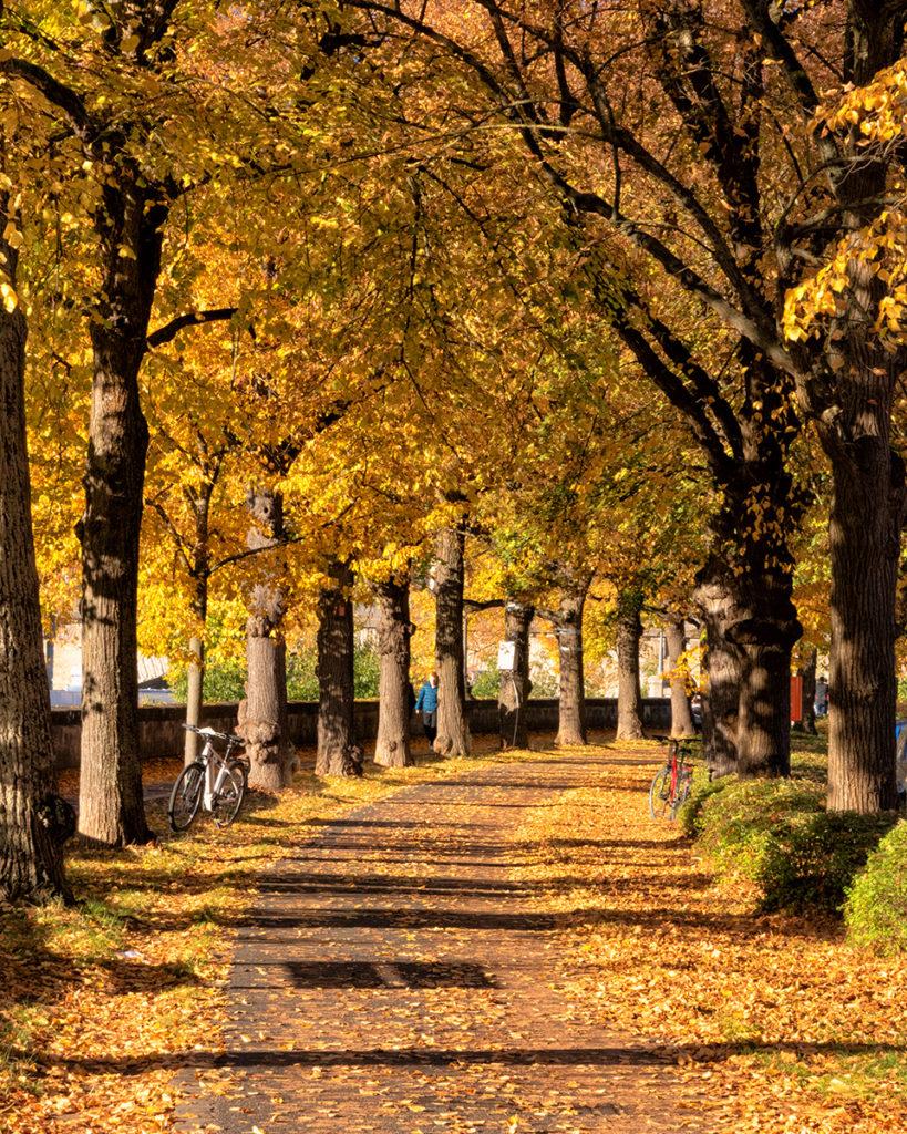 Traumhaftes Herbstwetter im Oktober 2021 in Würzburg.