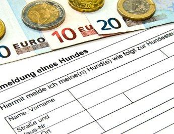 Bei Hundesteuerkontrollen droht ein hohes Bußgeld (Foto: Thorben Wengert / Pixelio.de)