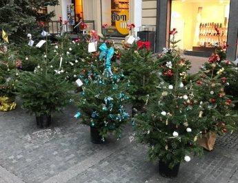 Weihnachtsbäume helfen Tierheim