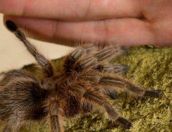 Studienteilnehmer gesucht: Neue Therapie gegen die Angst vor Spinnen im Test