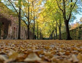 Symbolbild Herbst in Würzburg