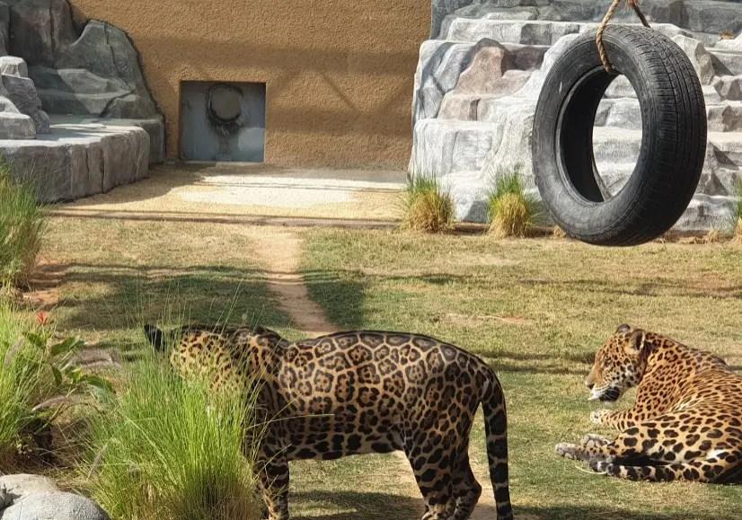 حديقة حيوانات في الرياض افضل حدائق لعام 2021 وجهات
