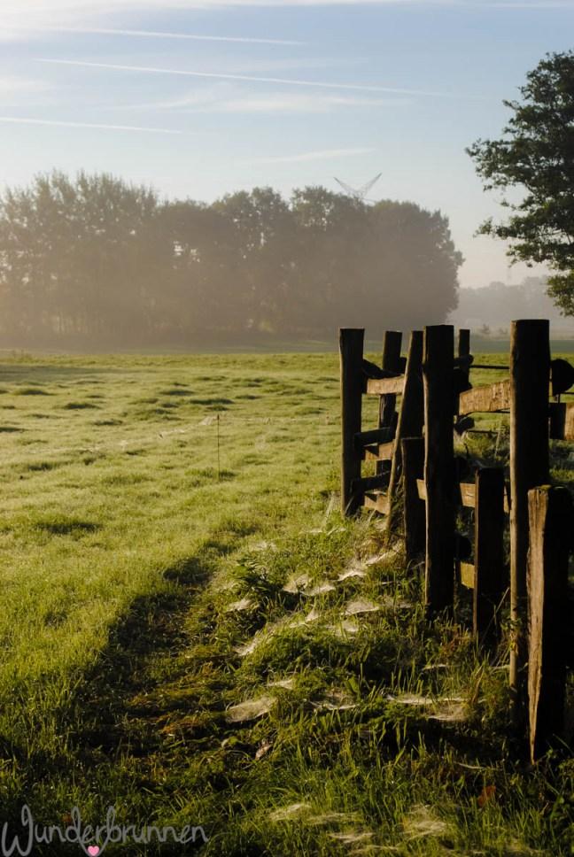 Hallo September! Zauberhafter Morgen - Wunderbrunnen - Foodblog - Fotografie