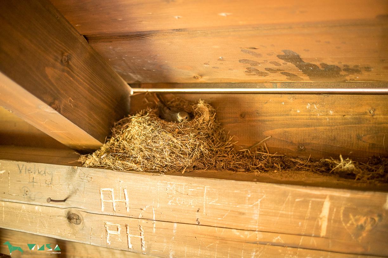 Vogelmama auf der Unterstandshütte