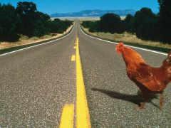 https://i1.wp.com/www.wussu.com/humour/images/road01.jpg
