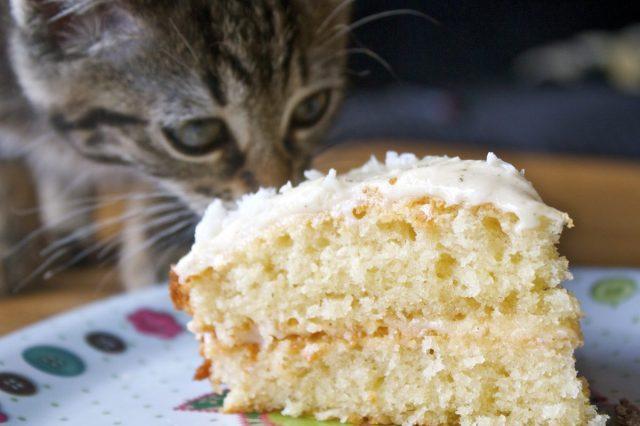 cat, licking, cake, slice, coconut, gluten, free, recipe, jasmine, tea, infused, cream, butter