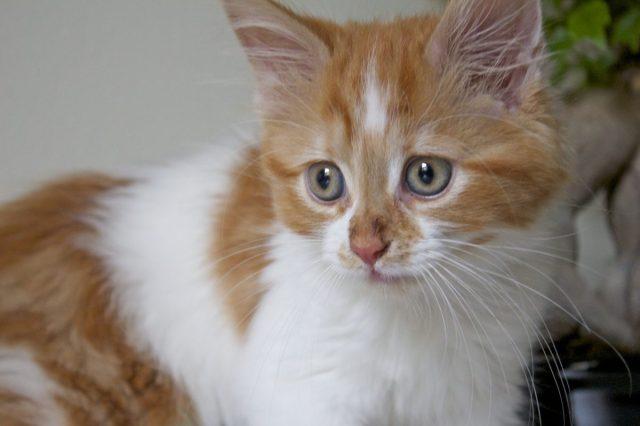 miko, cat, cute cat, cute kitten, wuthering bites, gluten free blog uk, gluten free