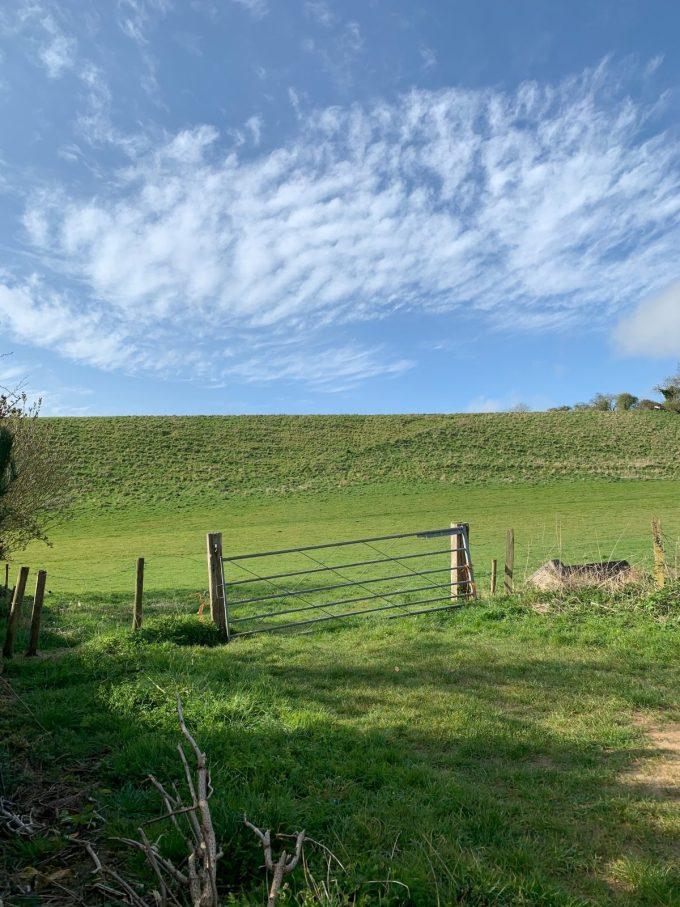 Sunny Meadow, Dorset, Sherborne, Gate, Field, sunshine field, @ahouseindorset, @wutheringbites