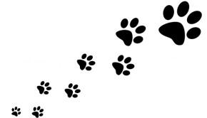 paw-prints