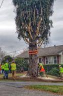 Tree Cutting p-2