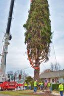 Tree Cutting p-4