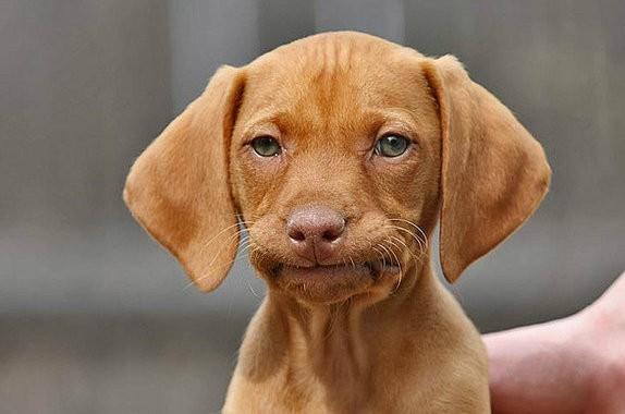 Unimpressed-Dog-Meme-08 - Unimpressed - Tira-Pasagad | Saksak-Sinagol