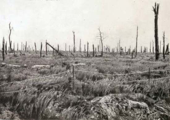 Delville Wood just after the War