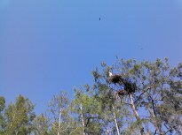 1600x1200 High nest, in Lewis lake, by John S. Quarterman, for WWALS.net, 17 May 2014