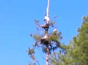 640x480 Movie: Birds and paddlers, in Lewis lake, by John S. Quarterman, for WWALS.net, 17 May 2014