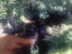 300x225 Very Red, in Alapahoochee River, by April Huntley, 1 September 2014