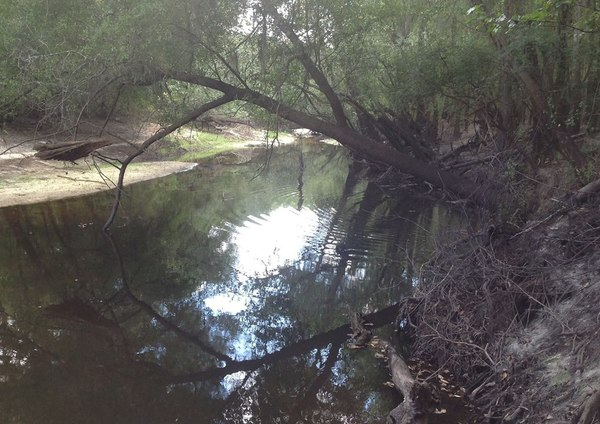 600x424 Looking south (downstream), in Alapaha River access at Riverside Church, by Bret Wagenhorst, 14 September 2014