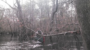 300x169 Bret and the red maples, in Alapaha deadfalls, by John S. Quarterman, for WWALS.net, 17 January 2015