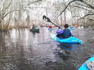 300x225 Movie: Under branches (1.0M), in Alapaha deadfalls, by John S. Quarterman, for WWALS.net, 17 January 2015