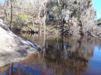4288x3216 Looking upstream, in Alapaha River at Statenville, January 2014 WWALS Outing, by Gretchen Quarterman, 18 January 2014