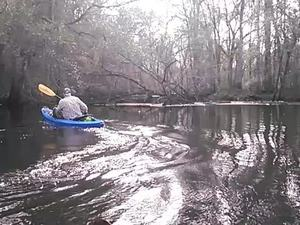300x225 Movie: Look around (2.4M), in Alapaha deadfalls, by John S. Quarterman, for WWALS.net, 17 January 2015