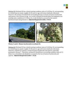 300x388 Mature hardwoods in wetland 20, in RE: SAS-2014-00862, Proposed U.S. Highway 84 Widening, by Gilbert B. Rogers, for WWALS.net, 28 May 2015