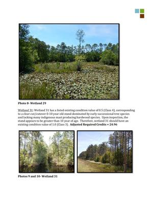 300x388 Wetlands 29 and 31, in RE: SAS-2014-00862, Proposed U.S. Highway 84 Widening, by Gilbert B. Rogers, for WWALS.net, 28 May 2015