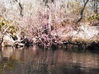 640x480 Movie: MOL095 (3.5M), in Statenville to Sasser Landing on the Alapaha River, by John S. Quarterman, for WWALS.net, 15 February 2015