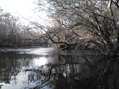 640x480 Oak reflections just below power line, in Statenville to Sasser Landing on the Alapaha River, by John S. Quarterman, for WWALS.net, 15 February 2015