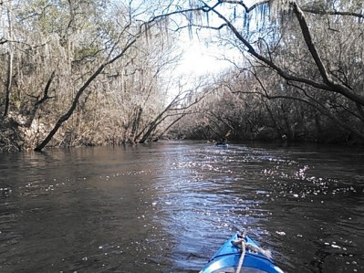 640x480 Ripples and arching branches, in Statenville to Sasser Landing on the Alapaha River, by John S. Quarterman, for WWALS.net, 15 February 2015