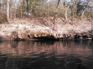 640x480 Sandy oak bank, in Statenville to Sasser Landing on the Alapaha River, by John S. Quarterman, for WWALS.net, 15 February 2015
