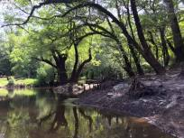 960x720 Cypress roots picture, in Confluence of the Little and Withlacoochee Rivers, by Julie Bowland, for WWALS.net, 2 July 2015