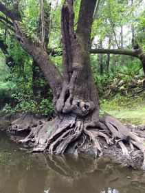 540x720 Mother Nature outdoes herself in the sculpture department!, in Confluence of the Little and Withlacoochee Rivers, by Julie Bowland, for WWALS.net, 2 July 2015