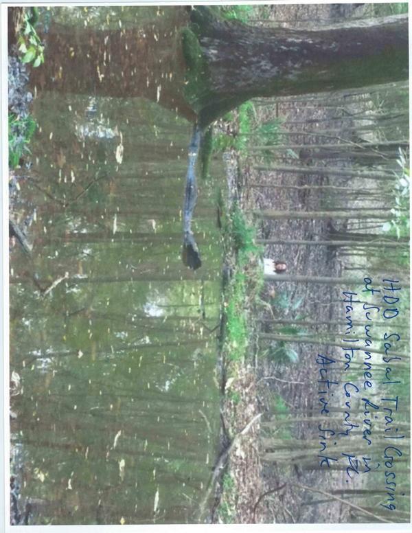 Figure 5: Active sink 2, Sabal Trail HDD, Suwannee River, Hamilton Co.