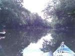Leaves in river