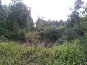 e. to huge sinkhole just s. of US 90 e. of Pilgrims Pride, 30.3720440, -83.1548290