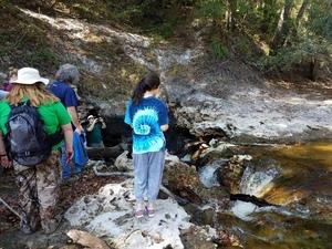 the Alapaha River sink, 30.5855189, -83.0528064