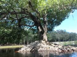 Island tree landscape 30.5542650, -82.7240867