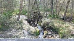 Tiger Creek downstream, Ousley Road, 30.7895789, -83.4278216