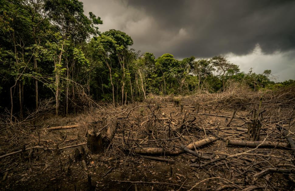 The effects of deforestation have permanent environmental consequences. The Effects Of Deforestation Wwf