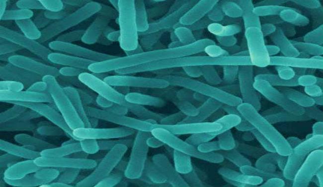 Listeriabacteria_184741