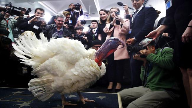 turkey pardon_746075