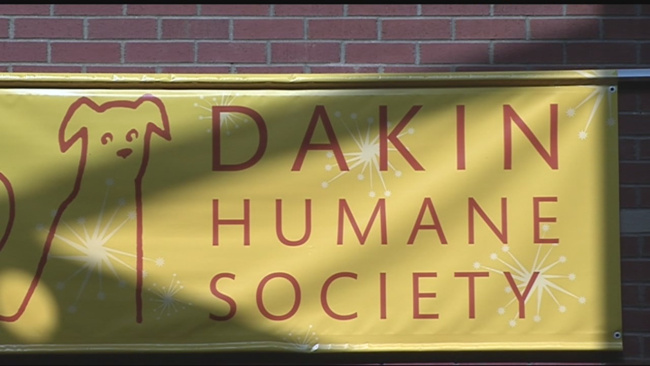 super-small-saturday-held-at-dakin-humane-society_1522099004315.jpg