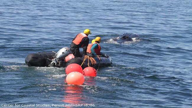 Coastal Studies Whale_1524582505923.jpg.jpg