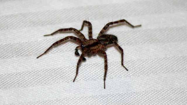 spider-generic-_1539375817377_58797235_ver1.0_640_360_1539378302617_58801411_ver1.0_640_360_1539420762820.jpg