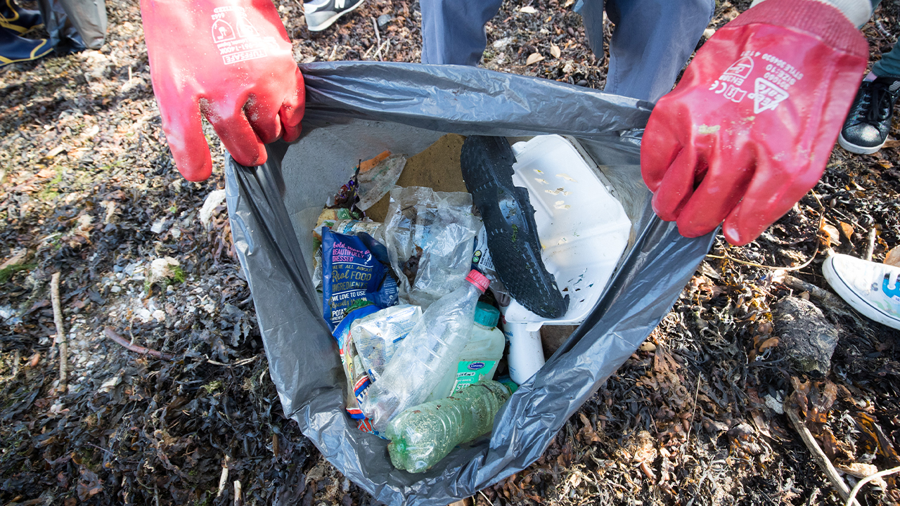 litter clean up-846652698