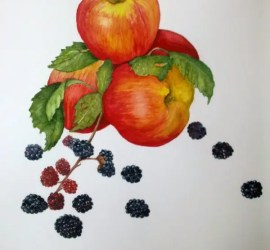 apples & blackberries botanical painting by Gillian Thomas