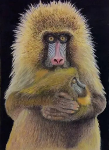 Christine Ainsworth Mandrill Monkeys painting entered into the WWPC artists competition 2017