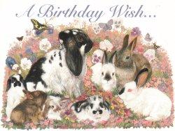 WXICOF Farm Animal Cards